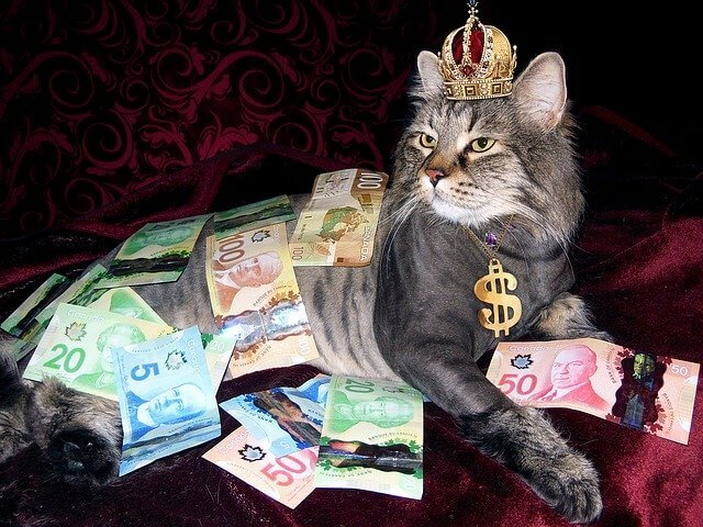 money, cat, wealth